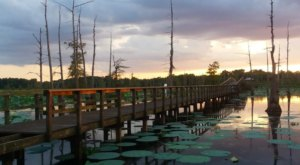 The Boardwalk Hike In Louisiana That Leads To Incredibly Scenic Views