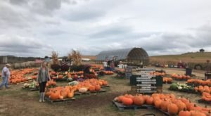 Nothing Says Fall Is Here More Than A Visit To West Virginia's Charming Pumpkin Farm