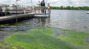 The Toxic Blue-Green Algae Responsible For Killing Dogs Around The U.S. Has Been Found In Minnesota