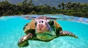 Get Up Close And Personal With Sea Turtles On An Adventure With Hawaii Turtle Tours