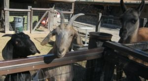 Cerrillos Petting Zoo Is A Small Town Petting Zoo In New Mexico That's Worthy Of A Road Trip
