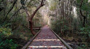 Sneak Away To These 11 Underrated Parks Near New Orleans For A Picture Perfect Afternoon