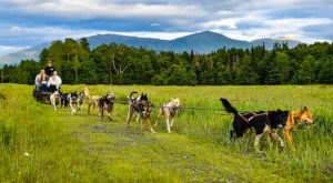 You Can Go Dog Sledding Year Round With This Fun New Hampshire Adventure