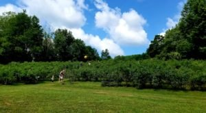 Pick Your Own Blueberries At This Charming Farm Hiding Near Buffalo