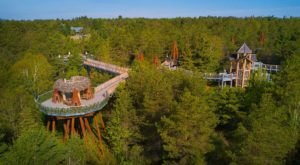 The Wild Walk In New York That Takes You High Above The Treetops
