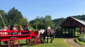 Take A Private Carriage Ride Through The Countryside With Gentle Giants For A Truly Unique Vermont Experience