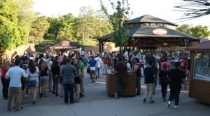 Explore Hogle Zoo After Hours At The Adults-Only Zoo Brew In Utah