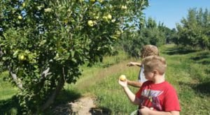 Pick Your Fill Of Apples At Costanza Orchard In New Mexico