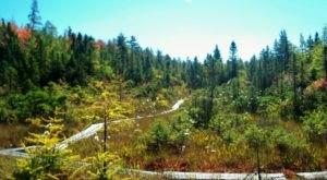 Explore The Boardwalks At Philbrick-Cricenti Bog In New Hampshire For A Unique Outing