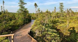 The Boardwalk Hike In Maine That Leads To Incredibly Scenic Views