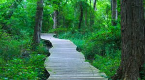 Take The Woodland Boardwalk Trail Alongside A Lily Pond In Massachusetts For A Beautiful Outing