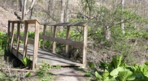 Boyce Park Log Cabin Trail, A 2.9-Mile Hike Near Pittsburgh, Takes You Through A Beautiful Wooded Area