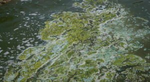 The Toxic Blue-Green Algae Responsible For Killing Dogs Around The U.S. Has Been Found In Texas