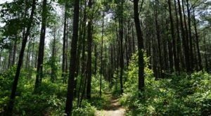 This 5-Mile Hike In Louisiana Takes You Through An Enchanting Forest