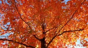 The Best Times And Places To View Fall Foliage In Kentucky