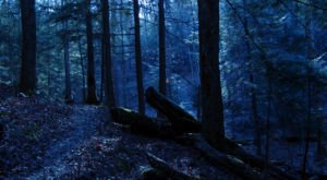 The Bizarre Story Of An Alleged Bigfoot Sighting At A U.S. National Park