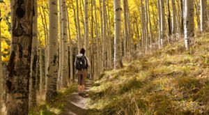 Plan A Trip To Flagstaff, Arizona For Incredible Leaf Peeping This Fall