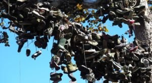 The Shoe Tree Is A Mysterious Hidden Gem Attraction In Indiana You Never Even Knew Existed