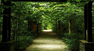 Hike Through A Canopy Of Trees Along The Best Hiking Trails In Cincinnati