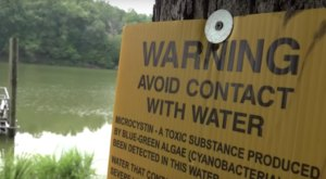 Keep Your Kids And Pets Away From The Toxic Blue-Green Algae That's Been Spotted In Virginia
