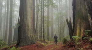 The Towering Redwoods On This Trail Are Some Of The Oldest Trees In Oregon