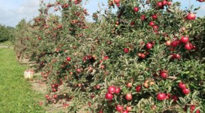 Hy's Cider Mill Near Detroit Has 13 Delicious Apple Varieties Prime For The Picking