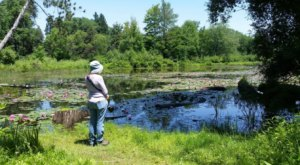 Reinstein Woods Loop, A 2-Mile Hike In Buffalo, Takes You Through A Beautiful Nature Preserve