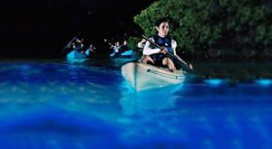 Experience Florida's Glowing Waters From A Clear-Bottom Kayak On This Magical Bioluminescence Tour