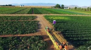 Arizona's Apple Annie's Orchard Has 10 Delicious Apple Varieties Prime For The Picking