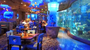 Dine Among Sea Creatures At The Houston Aquarium Restaurant In Texas