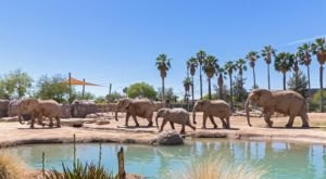 Reid Park Zoo Is A One-Of-A-Kind Elephant Ranch In Arizona