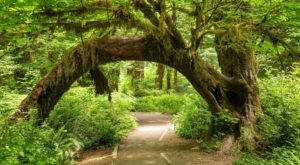 This Washington Rainforest Hike Will Really Take You Away From It All