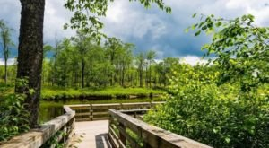The Freeland Boardwalk Trail In West Virginia Skims Across The Top Of Gorgeous Wetlands