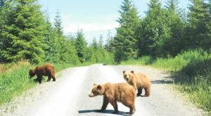 You Can Hang Out With Grizzly Bears On A Tour Of Chichagof Island In Alaska