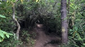 Take The Shady Hobbit Trail In Oregon To Reach A Beautiful, Secluded Beach