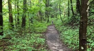 Whittleton Branch Trail Is A Beginner-Friendly Waterfall Trail In Kentucky That's Great For A Family Hike