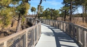 The Boardwalk Hike In Delaware That Leads To Incredibly Scenic Views