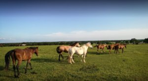 You Can Stay The Night On This 4,000-Acre Wild Horse Sanctuary In Oklahoma That's Beyond Gorgeous