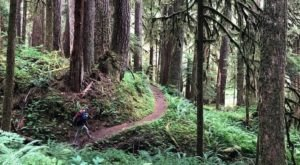 Sol Duc Falls Nature Trail Is A Beginner-Friendly Waterfall Trail In Washington That's Great For A Family Hike