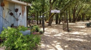 There's A Charming Cafe Hiding In The Middle Of This Texas Lavender Farm