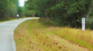 Withlachoochee State Trail Is Perfect For Florida Nature Lovers