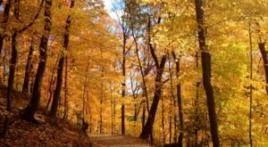 Surround Yourself With Fall Foliage On Frick Park Loop Trail, An Easy 4.9-Mile Hike In Pittsburgh