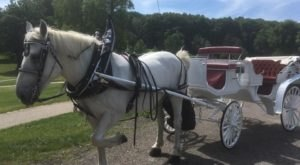 Take A Carriage Ride Through Pittsburgh With Mike's Carriage Service