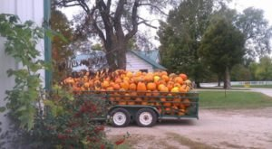 You Could Spend Hours In The 40-Acre Pumpkin Patch At Johnson Farms In Missouri