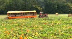Choose From Over 25 Acres Of Pumpkins At The Charming Riverbend Farm In North Carolina