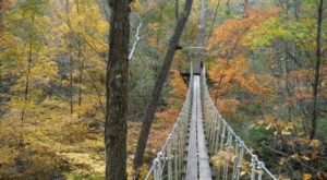 Zipline Through A Canopy Of Colorful Changing Leaves At Tree Frog Canopy Tours In Ohio