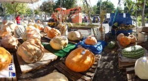 The Northern California Town Of Elk Grove Transforms Into A Pumpkin Wonderland Each Year