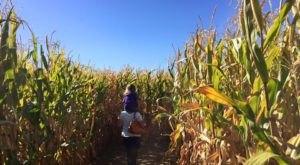 Get Lost In A 10-Acre Corn Maze At Wild Adventure Corn Maze In Idaho This Autumn