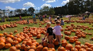Pick Your Own Pumpkins At Mrs. Heather's Pumpkin Patch In Louisiana This Fall