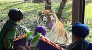 Trick Or Treat Among Zoo Animals Next Month At The Dakota Zoo In North Dakota